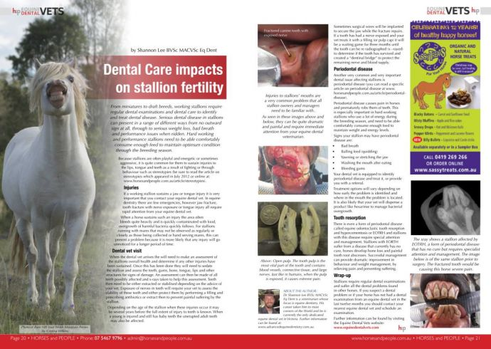Dental Care Impacts On Stallion Fertility