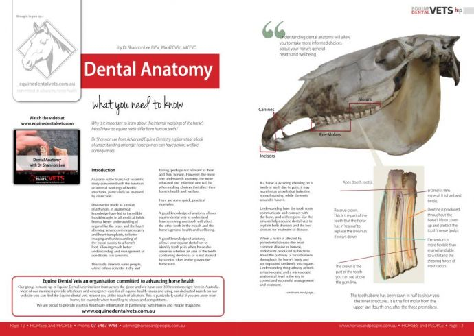 Dental Anatomy - what you need to know