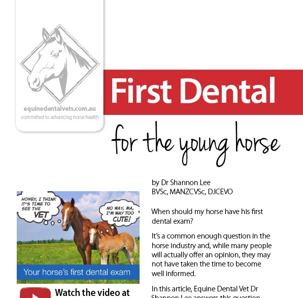 First Dental for the Young Horse