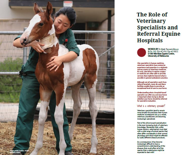 The Role of Veterinary Specialists and Referral Equine Hospitals