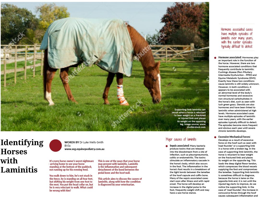 Identifying Horses with Laminitis