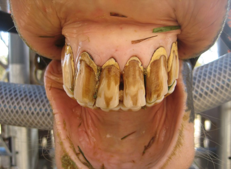 Dental Care for Older Horses