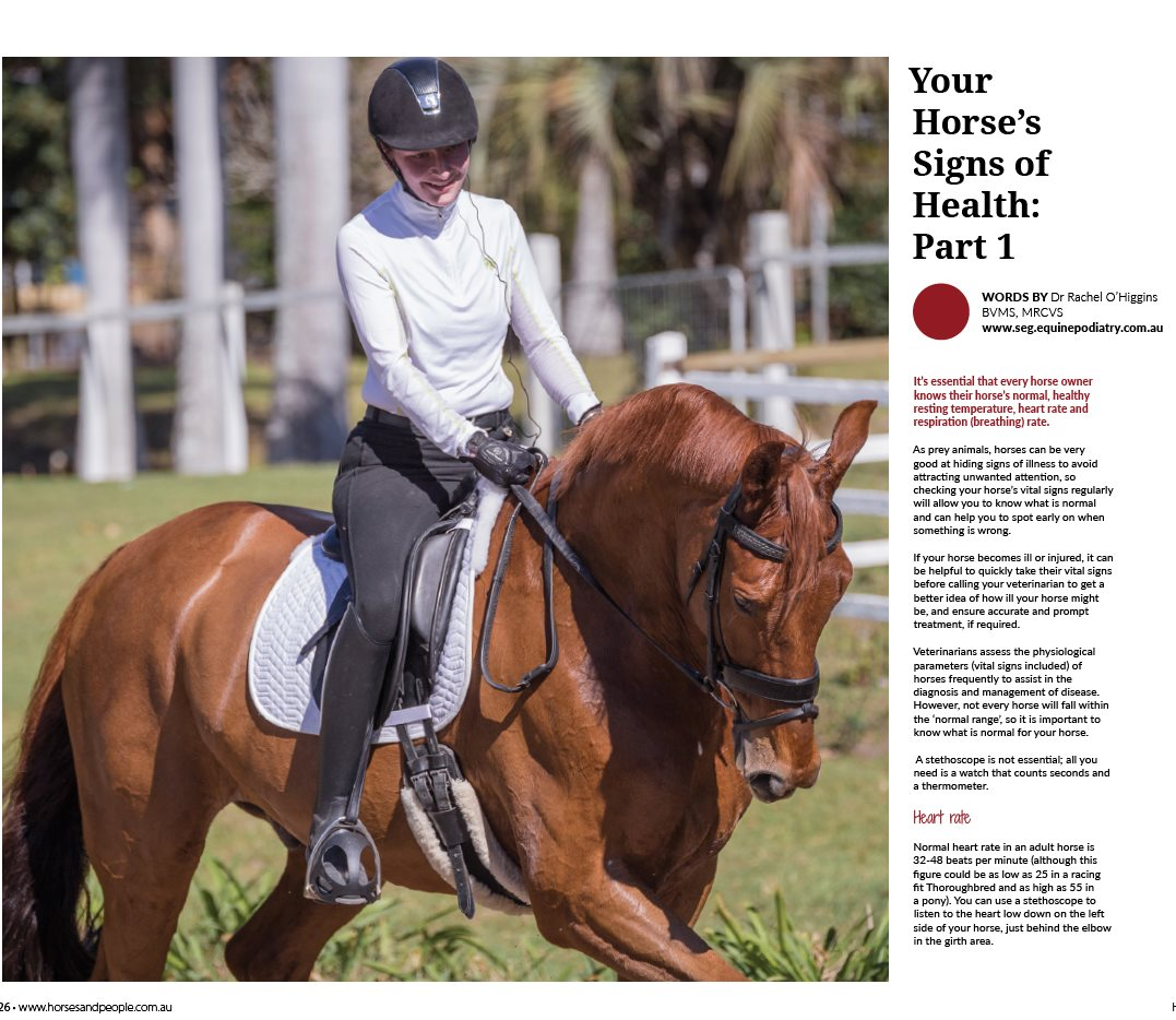 Your Horse's Signs of Health - Part 1